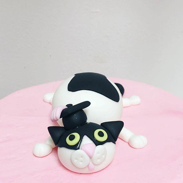 fondant fat cat